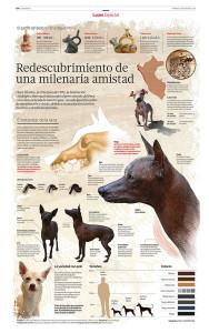 Peruvian_hairless_dog